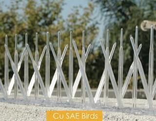 cu-sae-bird